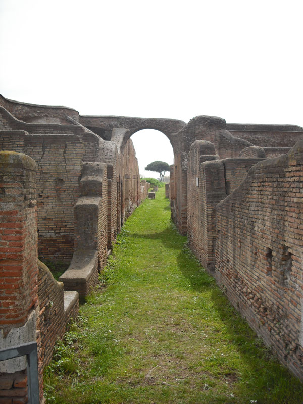 tree-through-ruins-ostia-antiqua